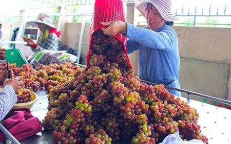 "Man nhan voi ""thien duong"" nho Ninh Thuan - Anh 6"