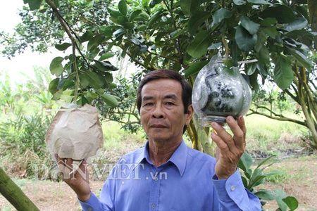 Buoi tao hinh ban do Viet Nam tien trieu duoc dat hang som - Anh 6