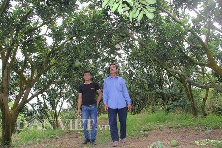 Buoi tao hinh ban do Viet Nam tien trieu duoc dat hang som - Anh 7
