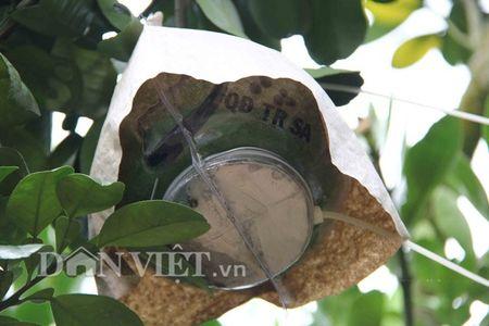 Buoi tao hinh ban do Viet Nam tien trieu duoc dat hang som - Anh 8