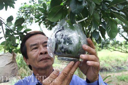 Buoi tao hinh ban do Viet Nam tien trieu duoc dat hang som - Anh 9