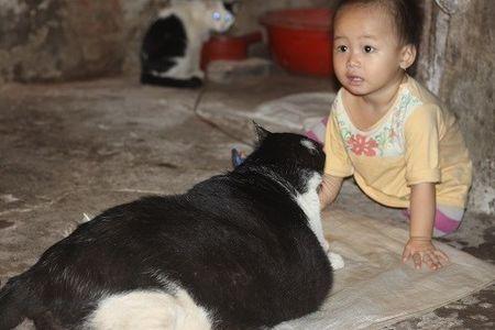 Meo khong lo 20kg o Viet Nam duoc len bao nuoc ngoai - Anh 7