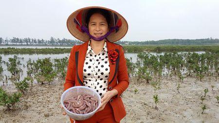 Hon mot chi vang moi mua duoc 1kg Sa sung Van Don kho - Anh 5