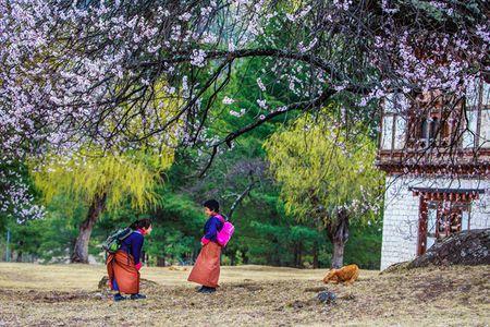Nhung khoanh khac tuyet dep o xu so co tich Bhutan - Anh 1