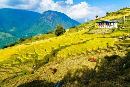 Nhung khoanh khac tuyet dep o xu so co tich Bhutan - Anh 8
