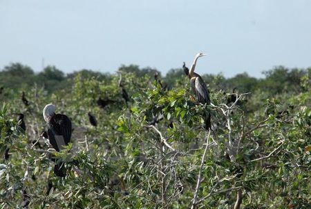Vuon chim Prek Toal cua Campuchia duoc cong nhan la khu Ramsar - Anh 1