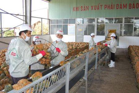 Viet Nam xuat khau ba dua sang Nhat Ban cho bo an - Anh 1