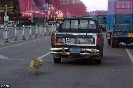 Phan no canh chu cho bi xe tai keo le den chet o TQ - Anh 1