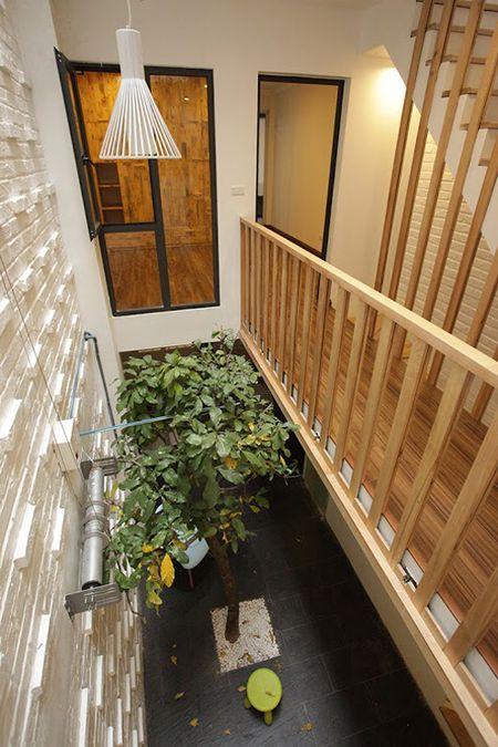 Trong cay to giua long nha ong 45 m2 o Ha Noi - Anh 4