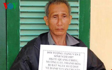 Mang 1.000 vien hong phien tu Lao ve Viet Nam tieu thu - Anh 1