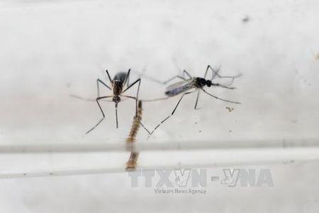 Bat tay nghien cuu vaccine phong chong virus Zika - Anh 1