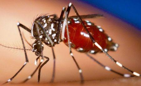 Nhung dieu can biet ve loai virus mang ten Zika - Anh 3