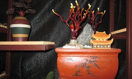 Nhieu nguoi khong tiec tien sam linh chi bonsai chuc trieu choi Tet - Anh 1