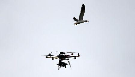 Ha Lan: Canh sat dung dai bang de ha drone 'cung dau' - Anh 1