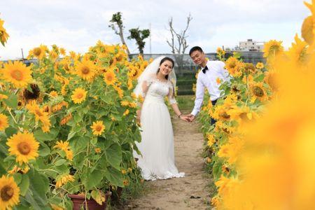 """Do xo den vuon hoa Huong Duong o Da Nang 'san"""" anh - Anh 4"""