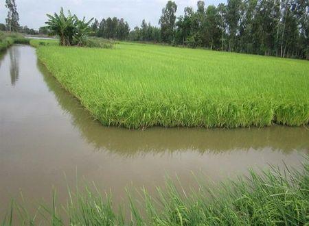 No am dang ve voi dong bao Khmer - Anh 2