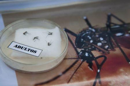 Nganh y phat hoang truoc tin virus Zika lay qua duong tinh duc - Anh 2