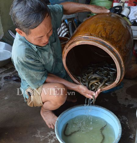 """Nuoi luon dong trong can nhua - mo hinh """"doc"""" nhat mien Tay - Anh 5"""