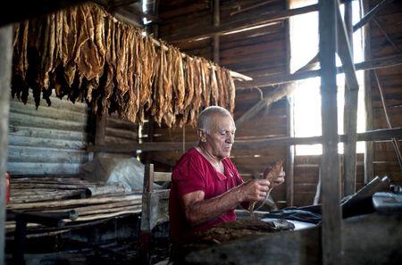 Theo dau Cigar o Cuba - Anh 1