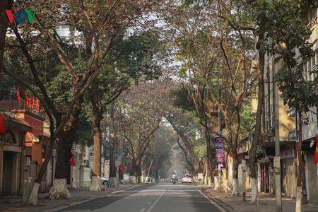 Ha Noi yen binh sang mung 1 tet Binh Than - Anh 5
