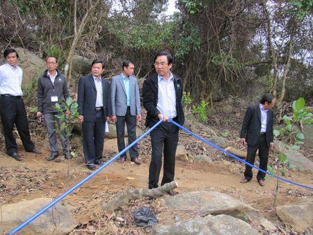 Pho Chu tich TP Da Nang bat qua tang dan pha rung trong cay - Anh 2
