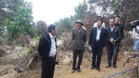 Da Nang: Dinh chi 5 kiem lam vu pha rung Son Tra - Anh 1