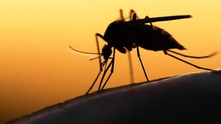 Virus Zika co the gay ra chung roi loan than kinh nguy hiem - Anh 1