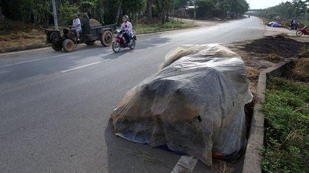 Dai lo hien dai nhat Viet Nam thanh san phoi - Anh 8