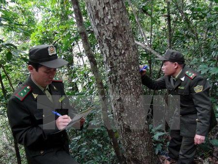 Doi tuong dam chet can bo lam nghiep tai Ninh Thuan ra dau thu - Anh 1