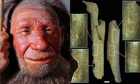 Phat hien dau vet cho thay nguoi Neanderthal tung xe thit dong loai - Anh 1
