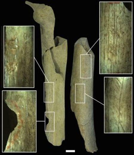 Phat hien dau vet cho thay nguoi Neanderthal tung xe thit dong loai - Anh 2
