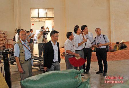 Doanh nghiep Nhat Ban khao sat 1 so mo hinh nong nghiep Nghe An - Anh 11