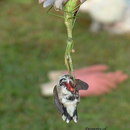 Kinh hoang canh tuong bo ngua cat co, an thit chim ruoi - Anh 6