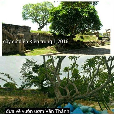Thuc hu chuyen 3 cay su o Dai noi Hue - Anh 6