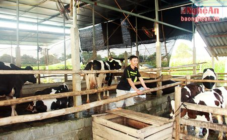 Nong dan Nghia Hoa thu hang tram trieu moi nam tu nuoi bo sua - Anh 1