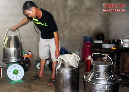 Nong dan Nghia Hoa thu hang tram trieu moi nam tu nuoi bo sua - Anh 5