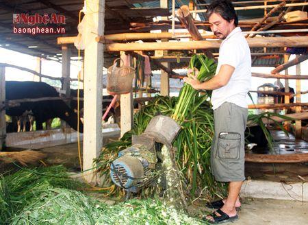 Nong dan Nghia Hoa thu hang tram trieu moi nam tu nuoi bo sua - Anh 7
