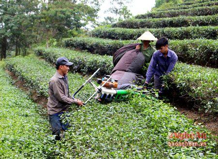 Thanh Chuong thu hai tren 55 nghin tan che - Anh 1