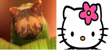 Ky quai loai sau co khuon mat... meo Hello Kitty - Anh 2