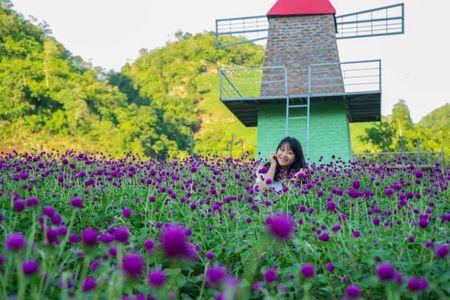 Thung lung hoa dep nhu mo o thien duong Moc Chau - Anh 8