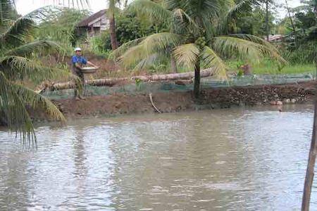 Tinh huong phap ly: Thuoc truong hop duoc cap 'so do', duoc boi thuong dat o - Anh 1