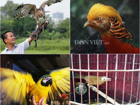 Nhung loai chim quy gia 'khung' dai gia Viet manh tay vung tien mua - Anh 1