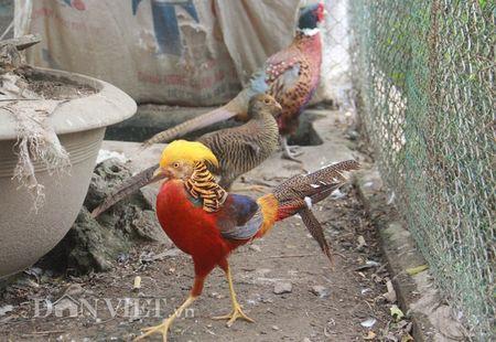 Nhung loai chim quy gia 'khung' dai gia Viet manh tay vung tien mua - Anh 2
