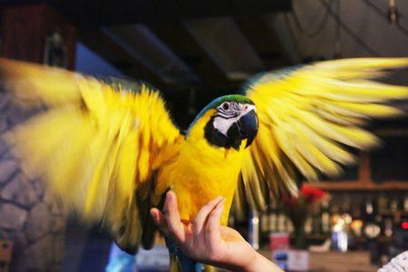 Nhung loai chim quy gia 'khung' dai gia Viet manh tay vung tien mua - Anh 7
