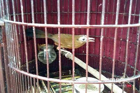 Nhung loai chim quy gia 'khung' dai gia Viet manh tay vung tien mua - Anh 9