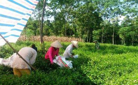 Nong dan Ha Noi hao hung voi mo hinh che theo tieu chuan VietGap - Anh 1