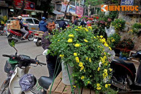 Sac hoa ruc ro tai pho hoa noi tieng nhat Ha Thanh - Anh 10