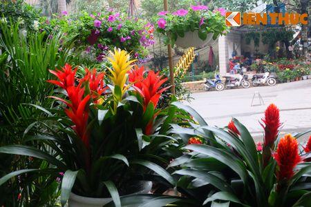 Sac hoa ruc ro tai pho hoa noi tieng nhat Ha Thanh - Anh 11