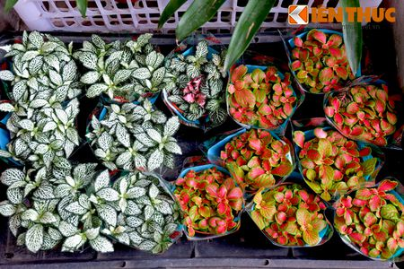 Sac hoa ruc ro tai pho hoa noi tieng nhat Ha Thanh - Anh 12