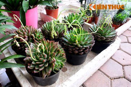 Sac hoa ruc ro tai pho hoa noi tieng nhat Ha Thanh - Anh 13